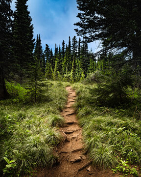 Forest Hiking Path Opening Up Into An Alpine Meadow. The Perfect Trail For A Nature Hike