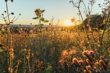 A wonderful sunset in the evening on a meadow of flowers between the plants in an atmospheric mood