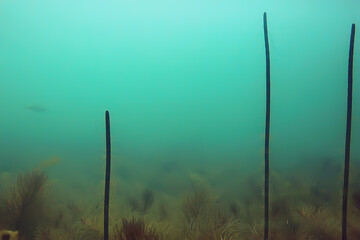 trees underwater fresh water / diving underwater photo flooded world, ecosystem underwater landscape