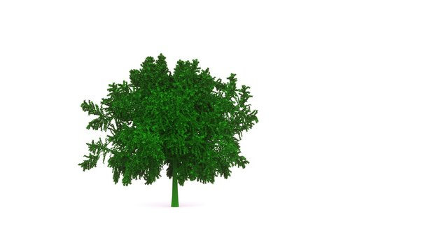 3d picture, green bush on a white background. Landscape design object, subject of ecology.