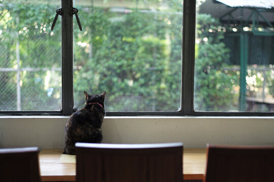 Back portrait of black cat sits alone on the table and looks out of the window