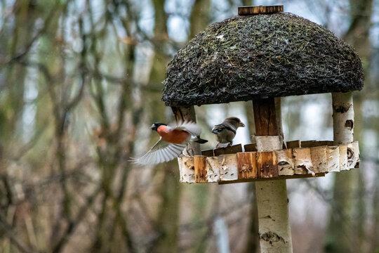 Vögel am Vogelhaus