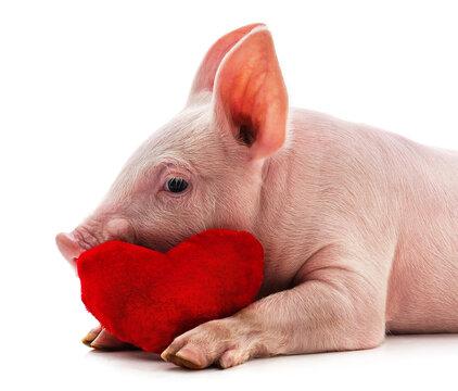 Little pink pig.