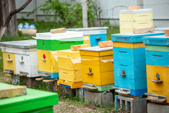 Colorful wooden and plastic hives against blue sky in summer. Apiary standing in yard on grass. Cold weather and bee sitting in hive.