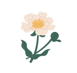 Elegant blossomed peony flower with stem and leaves. Gorgeous botanical floral element. Colorful flat vector illustration isolated on white background