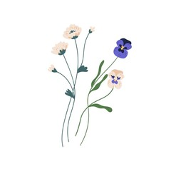 Gorgeous bunch of blossomed wildflowers like pansies and clovers. Delicate wild flowers isolated on white background. Botanical floral element. Colorful flat vector illustration