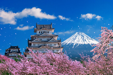 Wall Mural - Fuji mountains and castle with cherry blossom in spring, Japan.