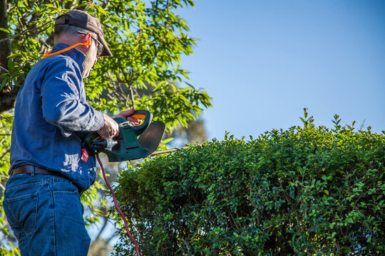 Man on a ladder trimming a hedge
