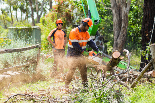 workman using chainsaw to cut branches into logs - tree removal