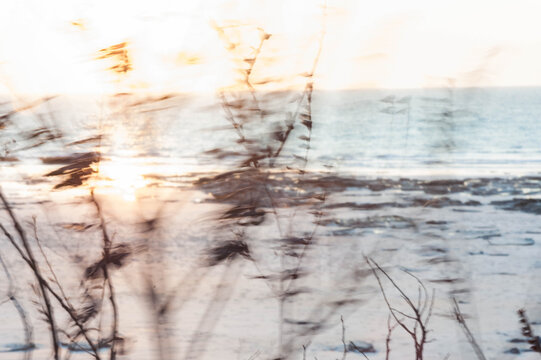 motion blur views of grasses on the beach at sunset
