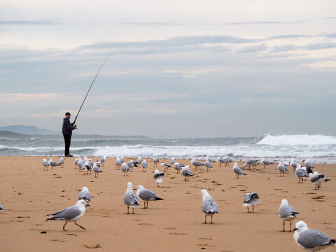 Fisherman on a beach with many seagulls and waves