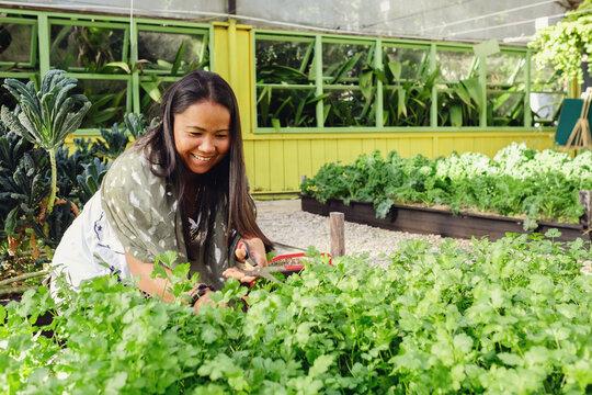 Asian woman picking herbs at organic farm