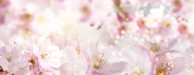 Beautiful cherry blossom background with magical lights and bokeh card.
