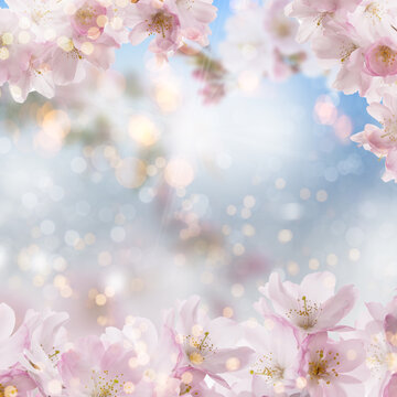 Cherry blossom background on white summer spring background with bokeh.