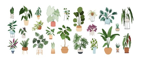Set of trendy potted plants for home. Different indoor houseplants isolated on white background. Alocasia, begonia, fan palm, monstera, ficus, strelitzia and oxalis. Colored flat vector illustration