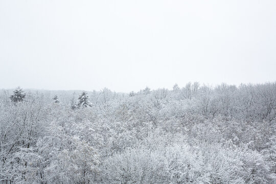 White winter landscape in the forest from above the tree line