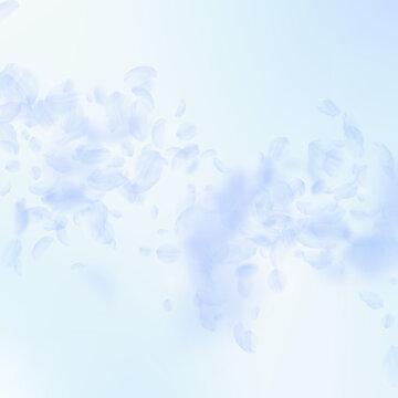 Light blue flower petals falling down. Elegant rom