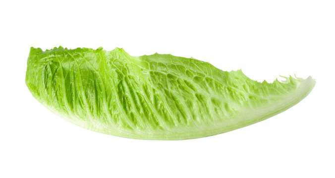 Cos lettuce isolated on a white background