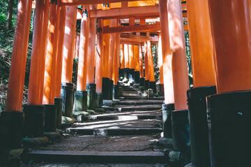 Kyoto, Japan - September 03, 2019 - Torii gates in Fushimi Inari Shrine, Kyoto, Japan