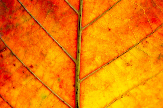 Red Leaf in Autumn. Abstract Art. Macro photography.