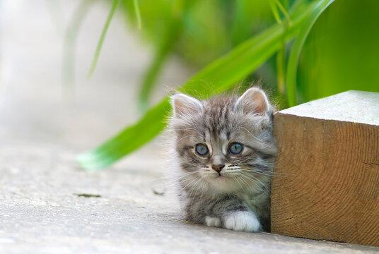 He hid. A kitten peeps from behind a wooden bar