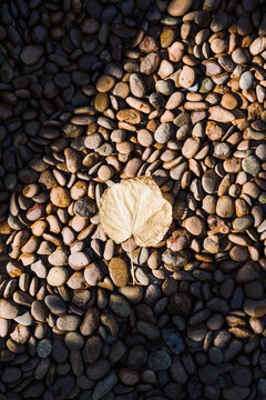 Top view sunny light on fall yellow autumn leaf stone background