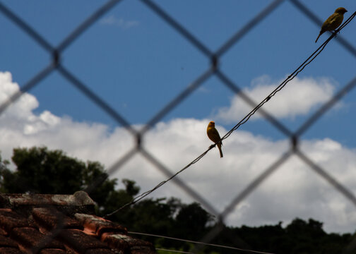 Pássaro livre