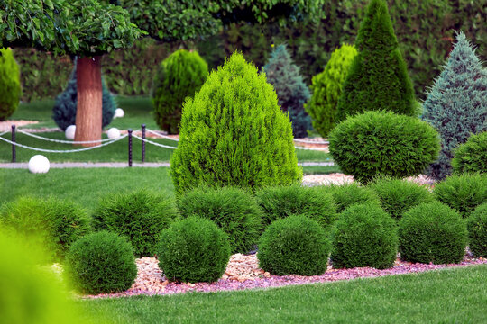 Landscape bed of garden with row growth arborvitae bushes by natural rock mulch way on a day spring yard details with green lawn and trees, nobody.