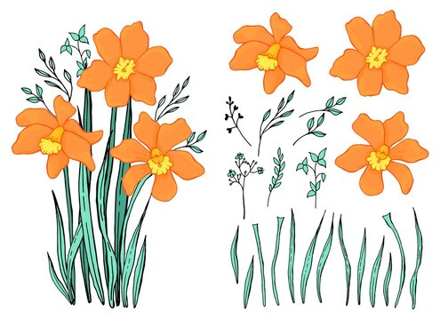 Spring wildflowers. A bouquet of snowdrops. Botanical elements set. Hand drawing. Line  art.