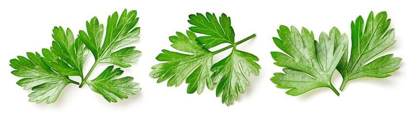 Fototapeta Parsley leaf isolated on white obraz
