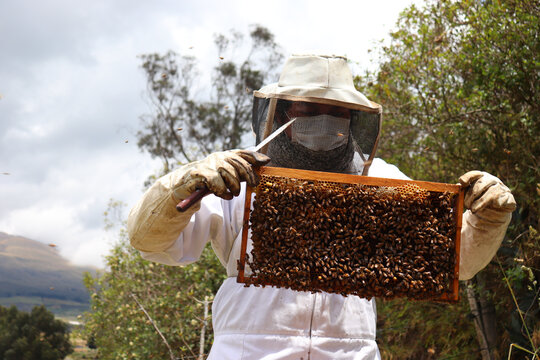beekeeper working in his apiary,  beekeeper holding a frame with bees and wax,