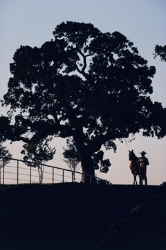 Cowboy standing next to his horse by a tree on top of a hill, Texas, USA