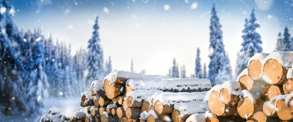 Forest pine and spruce trees covered with snow. Log trunks pile in winter, the logging timber wood industry.
