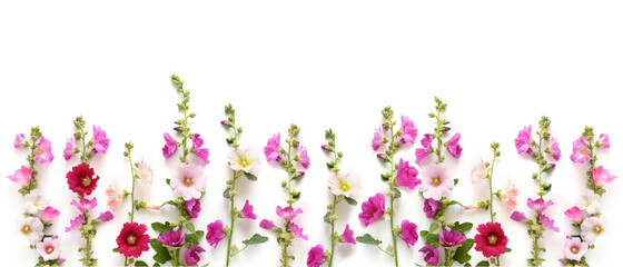 Fototapete - Creative floral flat layout, top view, banner. Floral festive background. Mallow branches isolated on white background.