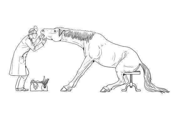 Veterinarian examines the horse. Dentist for the horse. Outline drawing.