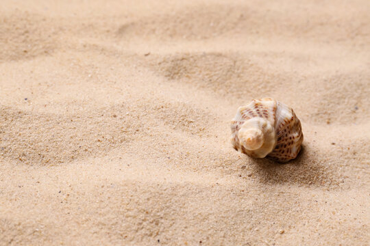 Beautiful seashell on beach sand, space for text. Summer vacation