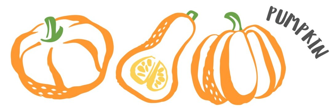Pumpkin hand painted with ink brush isolated on white background