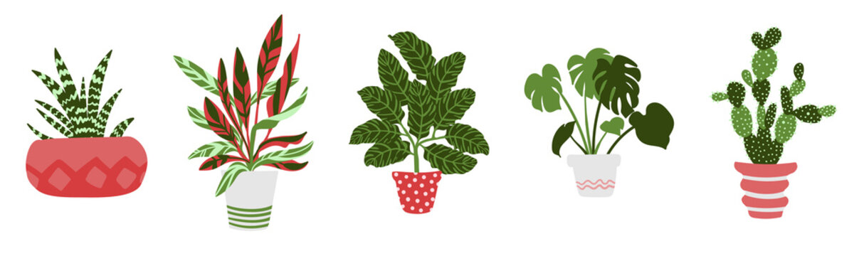 Vector set of five houseplants in pots. Cactus, aloe, monstera, calathea, stromanthe. Illustration of ornamental plants in a hand-drawn style in pink and green colors, isolated on a white background