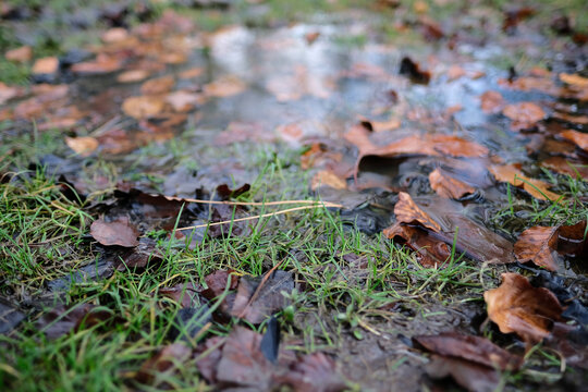 Close up of wet grass in puddle with leaves