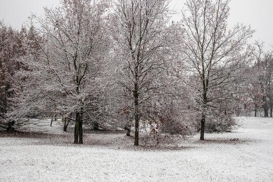 snowy trees of my city