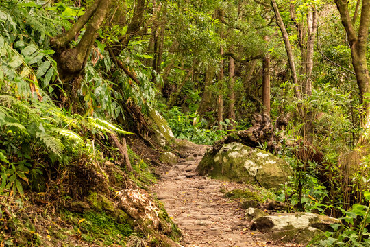 Einsamer Wanderweg zu einem Wasserfall auf der Azoren Insel Sao Miguel