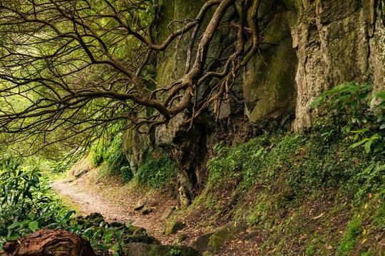 Mystischer Trail vorbei an Felsen und üppiger Natur auf den Azoren