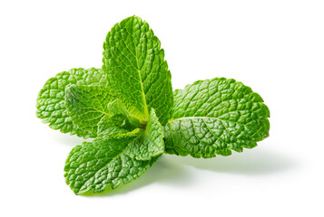 Fototapeta Mint leaf. Fresh mint on white background. Mint leaves isolated. Full depth of field. obraz