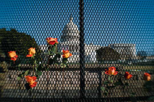 Flowers on fence protecting US Capitol after Jan 6 Riot