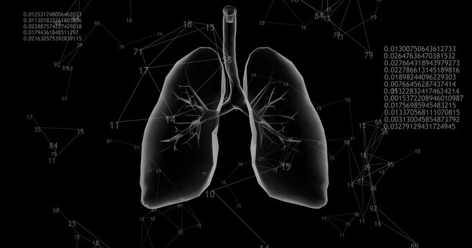 Rotating 360 low polygonal lungs 3D model on black background with animated numbers. 3D illustration
