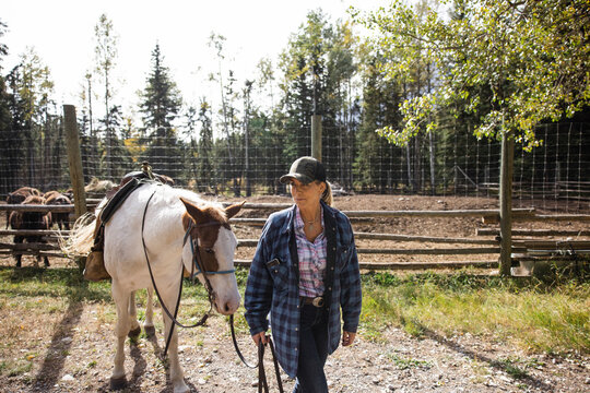 Woman leading horse on sunny ranch with bison