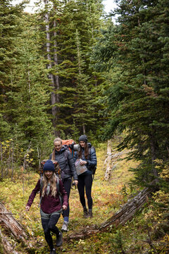 Young women friends backpacking among fir trees in remote woods