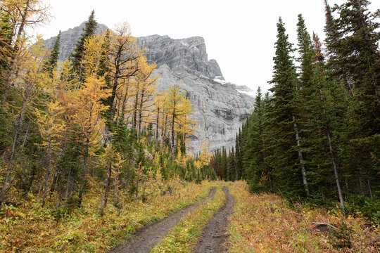 Majestic mountain above autumn trees in remote woods, Canadian Rockies