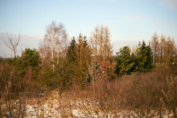 trees on a winter meadow, sunny winter day