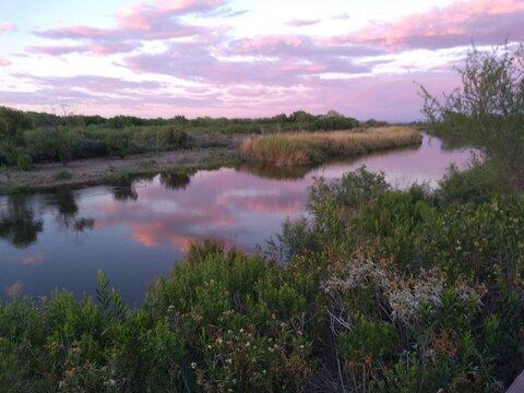 sunset on the Colorado River.  Yuma, Arizona